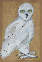 """Olwen the Snowy Owl by Leah McCloskey 13 x 17"""" mixed media on archival craft paper"""