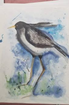 """Shore Bird Watercolor and Ink 24 """" x 18″ $40 not matted"""